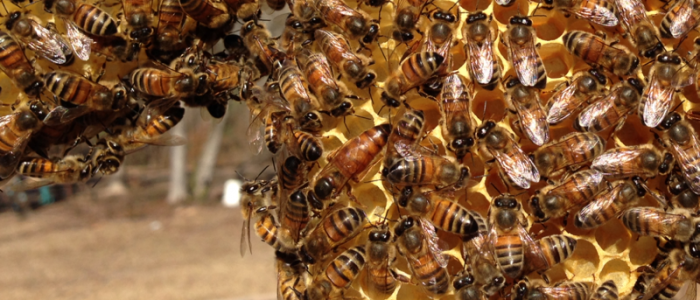 louisiana beekeepers association meeting By rick bogren, lsu agcenter about 10 years ago, louisiana had about three or four beekeeping clubs now, according to the louisiana beekeepers association website.